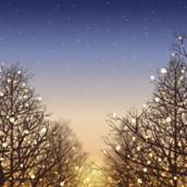 Winter night [LG Home+]