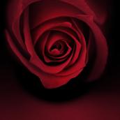 Rose [LG Home+]